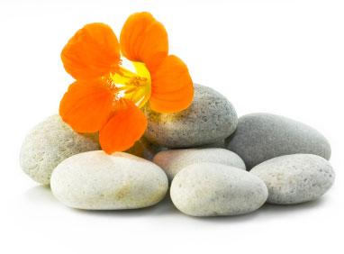 supervision-flowers-stones